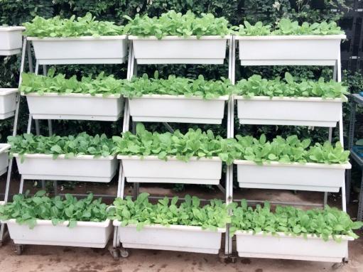Kệ trồng rau